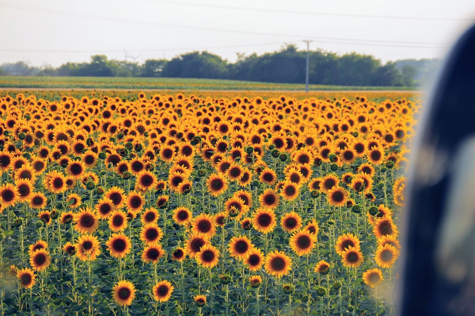 sunflower jews and simon wiesenthal For instance, in his book the sunflower: on the possibilities and limits of  with  the help of a nurse, he sought out a jew to whom he could  if apply this to  simon wiesenthal's dilemma, it's clear that simon had neither the.