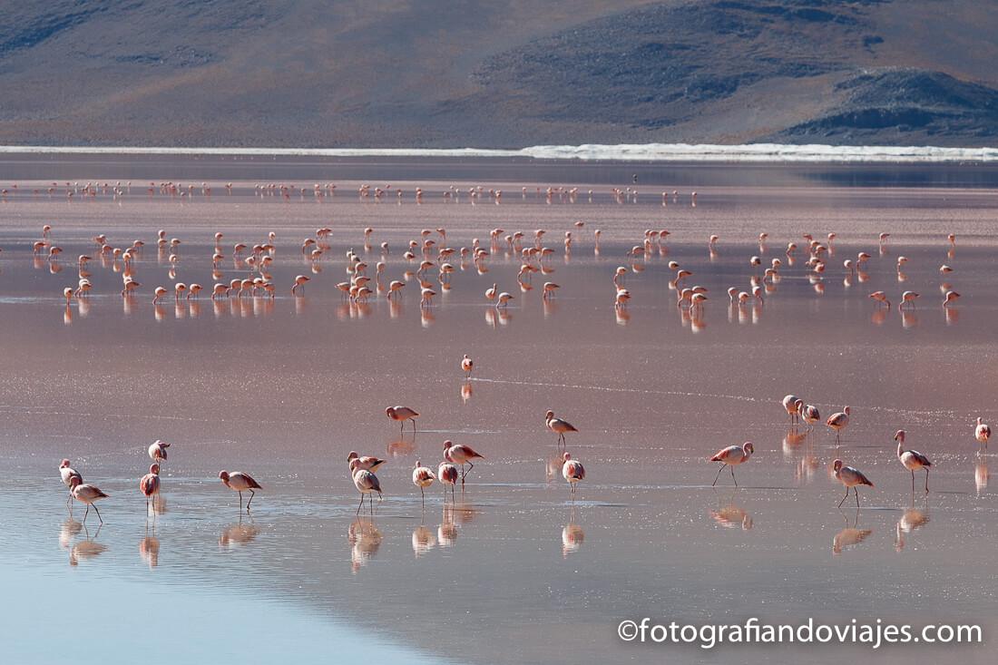Laguna Colorada Reserva Eduardo Avaroa