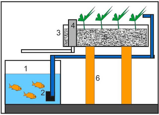 An Easy Way to Make Aquaponics at Home and urban farmers