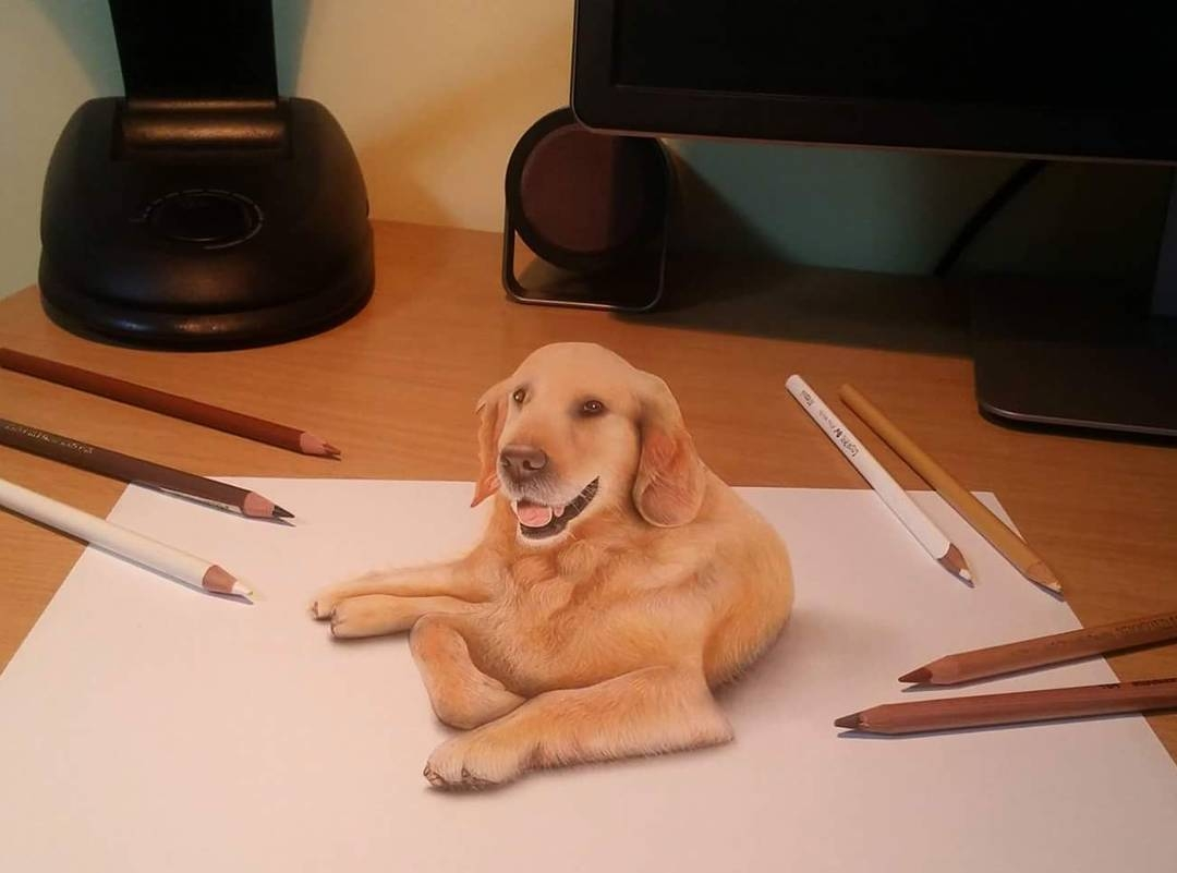 05-Golden-Retriever-Nikola-Čuljić-2D-Realistic-Drawings-that-look-3D-and-a-Video-www-designstack-co