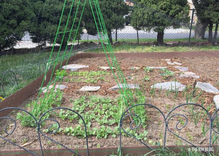 Veggie Garden // Garden Updates: Mid-Spring 2018 // www.thejoyblog.net