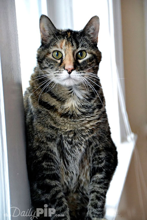 Find out how one senior cat was adopted after her owner passed away