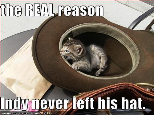 Indiana jones cat hat