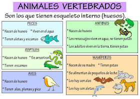 Resultado de imagen de vertebrados e invertebrados PARA NIÃ'OS