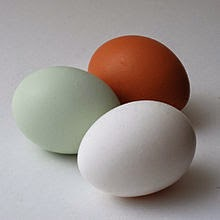 An Araucana egg with other eggs for comparison