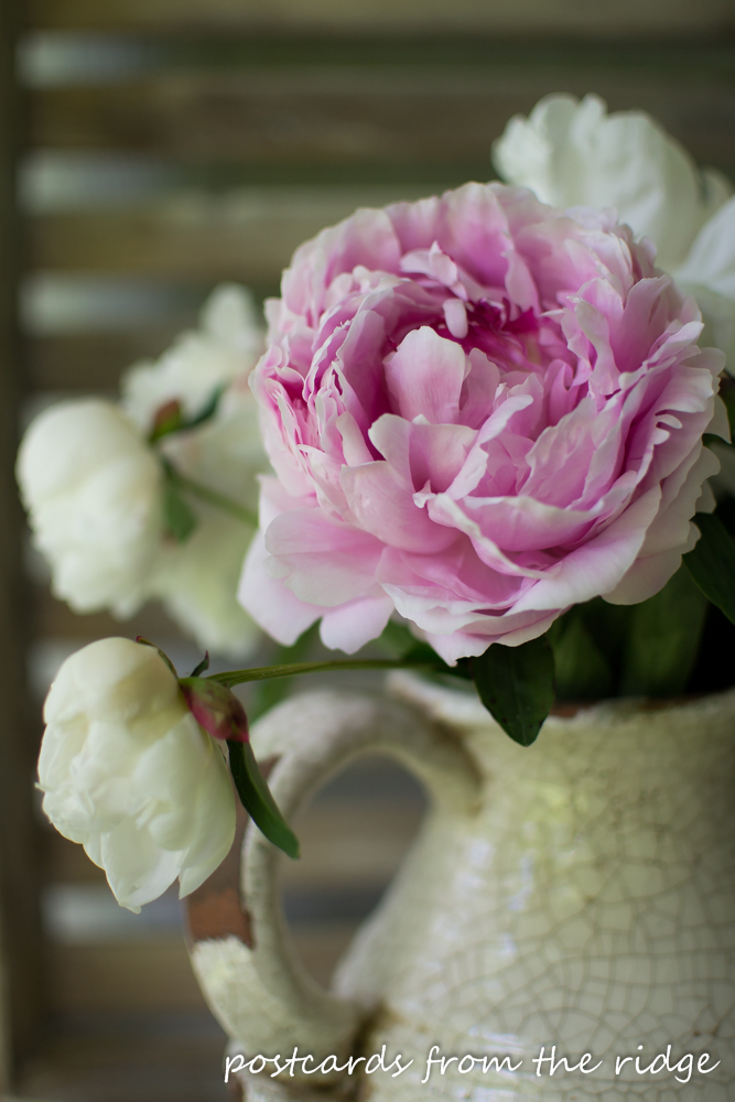Pink peonies as spring home decor.