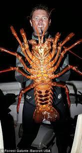 Lobster Oleh-Oleh Santolo Liburan Tahun Baru Kali Ini