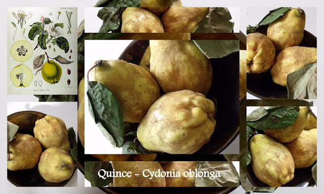 quinces, paste, jelly, recipes, how to make,
