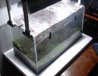 menanam tanaman moss Aquascape dengan sistem kering dry start method