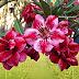 ชวนชมไม้สี ความสวย อมตะ ในราคา ย่อมเยา