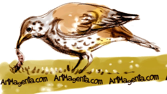 Mistle Thrush sketch painting. Bird art drawing by illustrator Artmagenta.