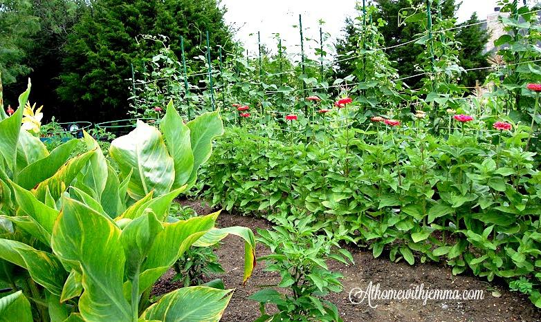 garden-gardening-health-benefits-athomewithjemma