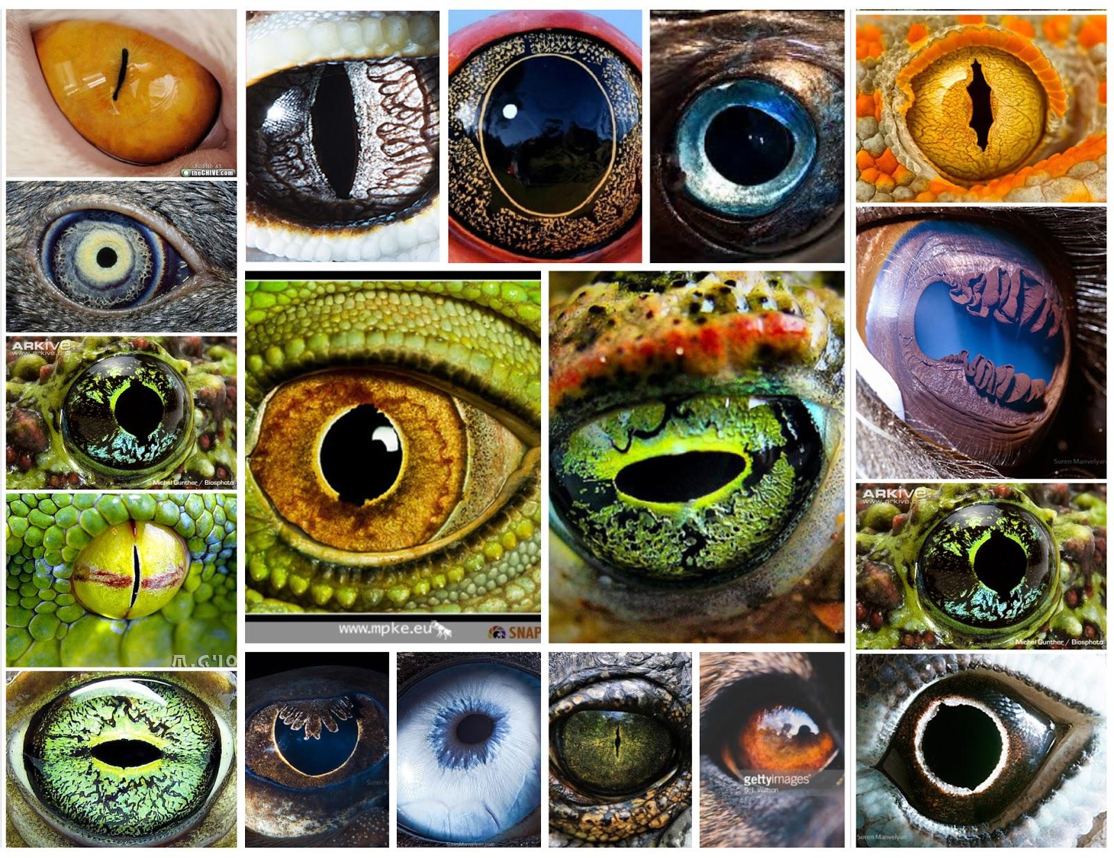 eyes animal eye nature series eyeballs interesting divine retina window imagination indulge listen says heart through these