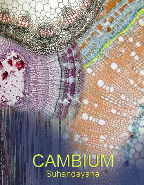 https://sipenulis.com/AKUNDAstudio/read/cambium/1