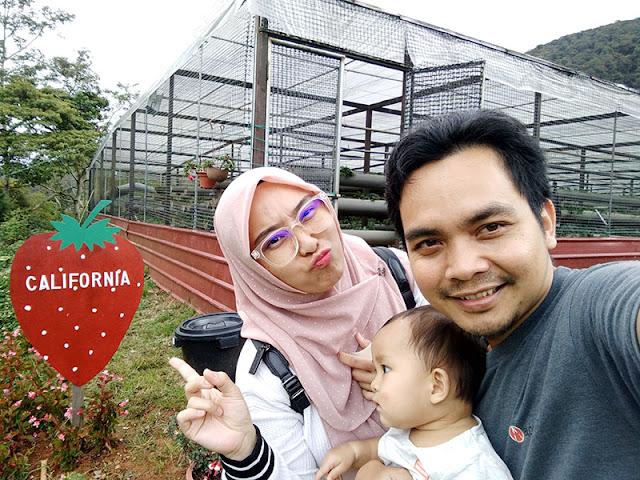strawberry farm kundasang sabah