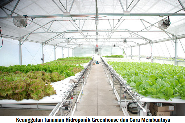Keunggulan Tanaman Hidroponik Greenhouse dan Cara Membuatnya