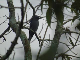 Tlogo Nirmolo: Still Having to Add a Hour of Birdwatching