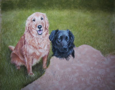 flat-coated retriever portrait in progress