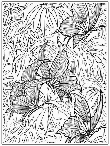 Adult Coloring Pages Butterfly  Realistic Coloring Pages