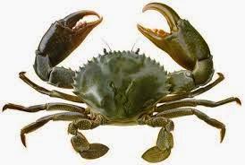 6100 Gambar Binatang Laut Yang Halal Gratis Terbaru