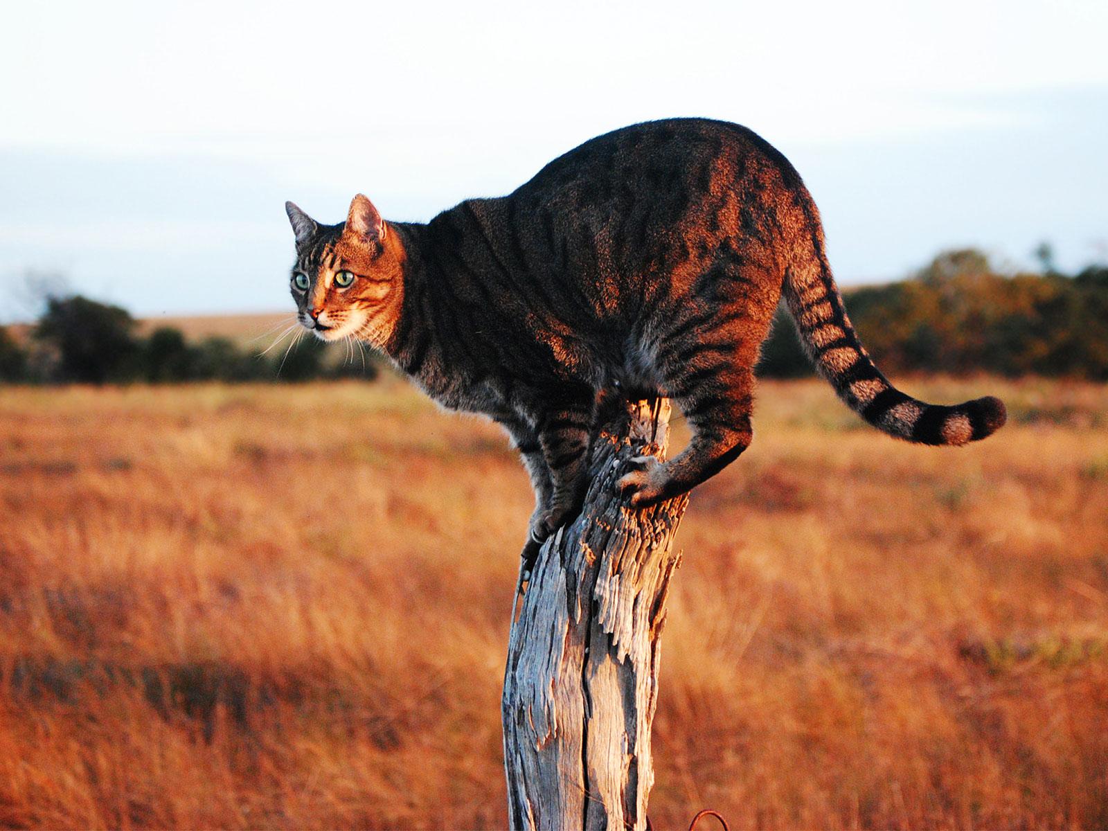 funny savannah cats
