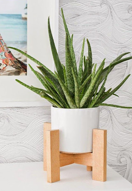 Aloe Vera is a very easy to maintain plant