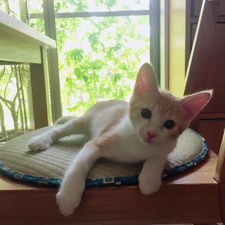 夏 座布団 猫