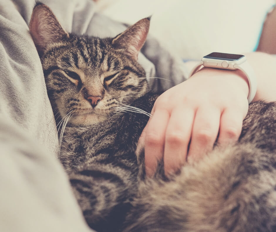How Having A Pet Can Make The Quality Of Your Life Better | Cuddles with your cat can make all the difference.