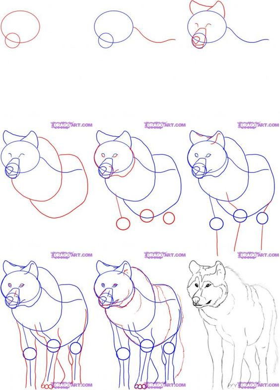 How To Draw A White Wolf Step By Step Anime Animals