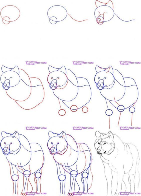 Como Hacer Un Boceto: Animales: Lobo (varias Posturas
