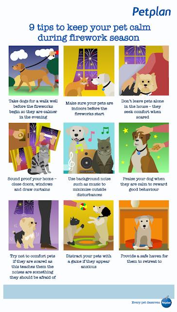 Petplan 9 tips to keep your pet calm during firework season
