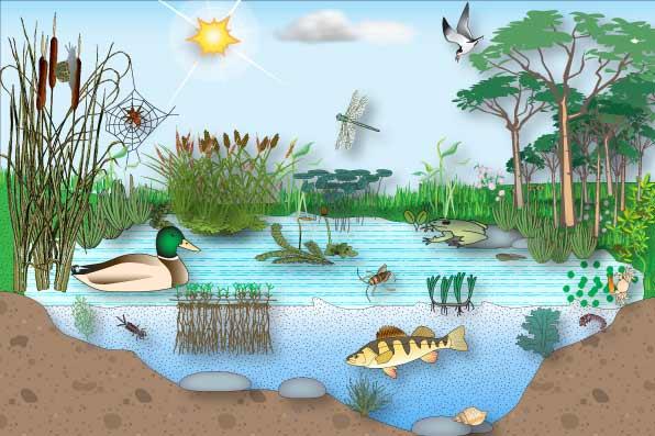 World Ecosystems