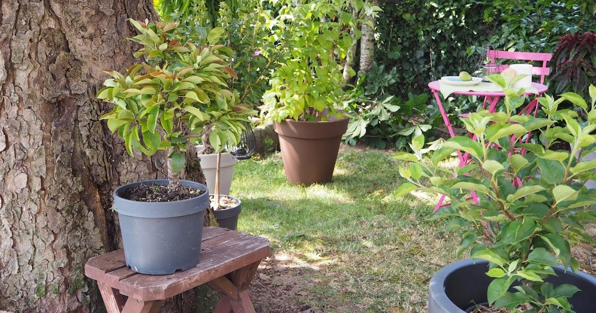 am nager sa terrasse ou son balcon penser aux fruitiers nains et colonnaires les carnets. Black Bedroom Furniture Sets. Home Design Ideas