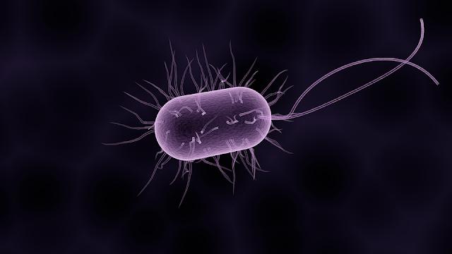 beyin, bayin bakterileri, beynimizde yaşayan bakteri,