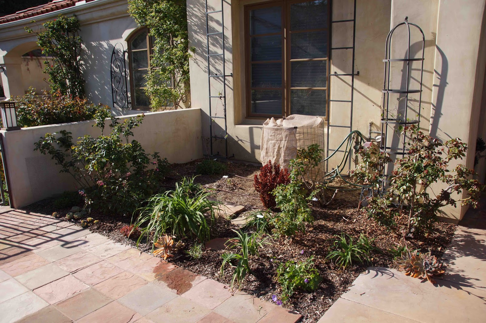 Four Different Days Of The Same Garden Bed: What\'s Missing?