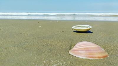 Concha Praia Cassino