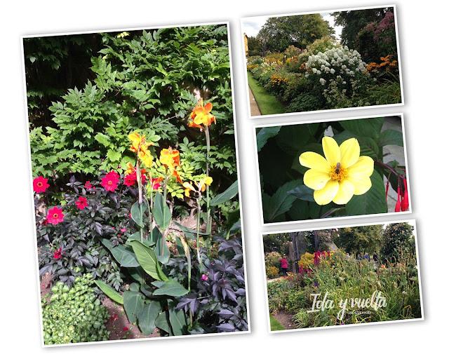 Flores en Oxford