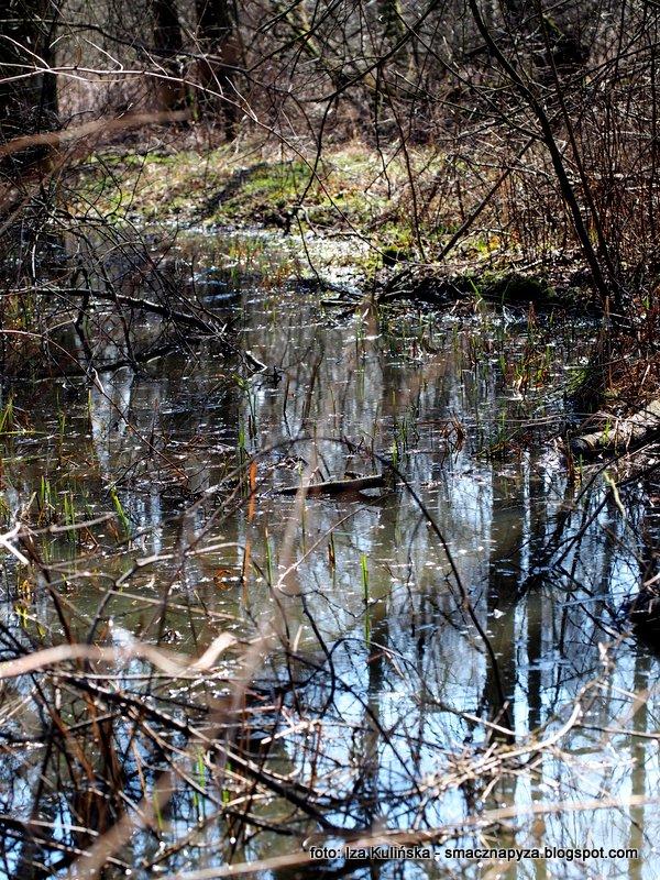 las bemowski, w lesie, tereny podmokle, bagna