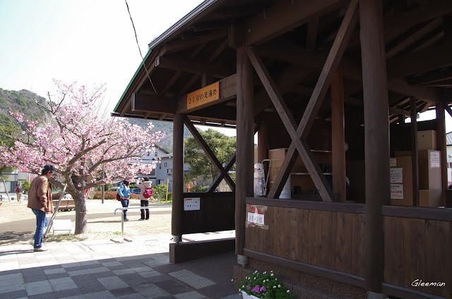 伊豆・河津櫻祭,笹原メイン会場的足湯