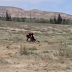 نسر ينقض على فتاة ويحاول افتراسها (فيديو)