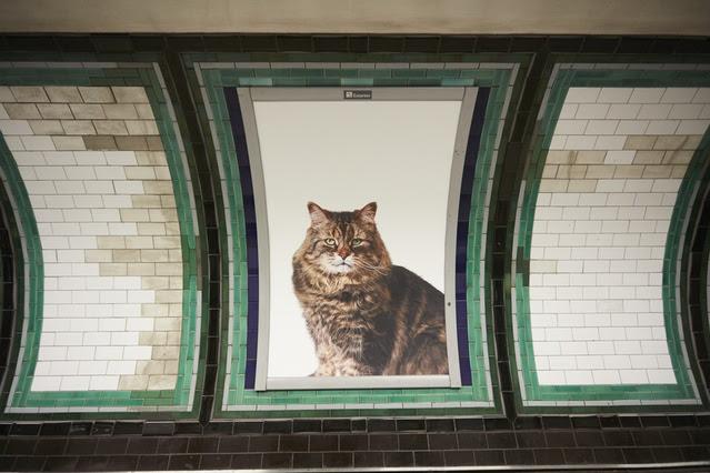 【全部都係喵】用創意改變社會 用貓貓擺脫商業廣告轟炸