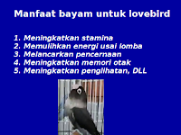 Manfaat Bayam Untuk Lovebird: Meningkatkan Dan Memulihkan Stamina Lovebird