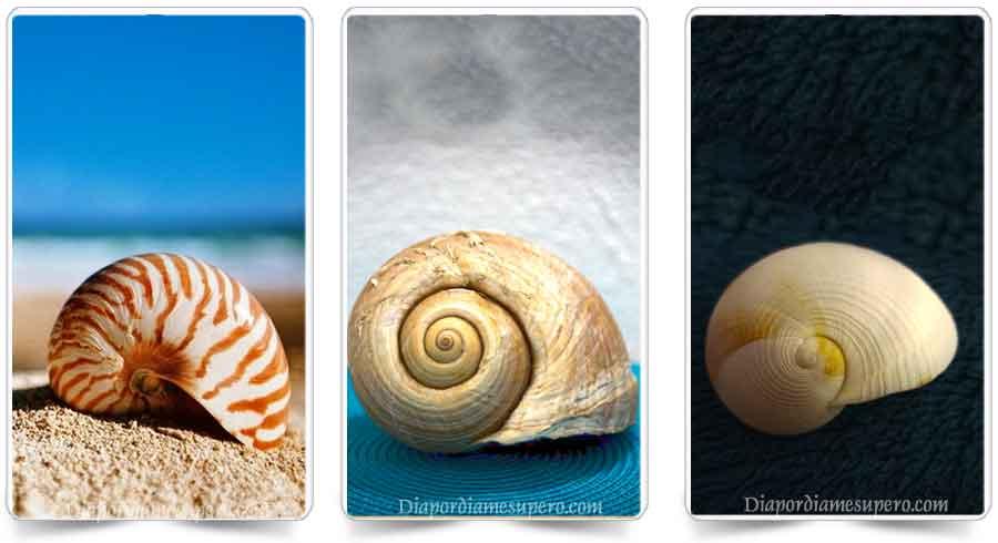 Oráculo: El mensaje de las conchas marinas
