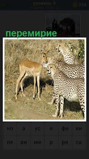происходит перемирие между зверями леопардом и антилопой