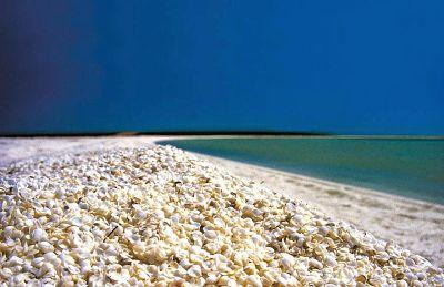 Suelo de conchas, Bahía Tiburón. Australia