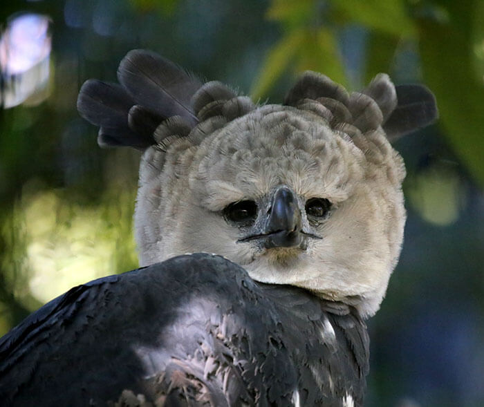 Huge Bird Looks Like A Person In A Costume