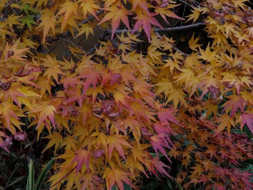 Meijer Garden autumn color
