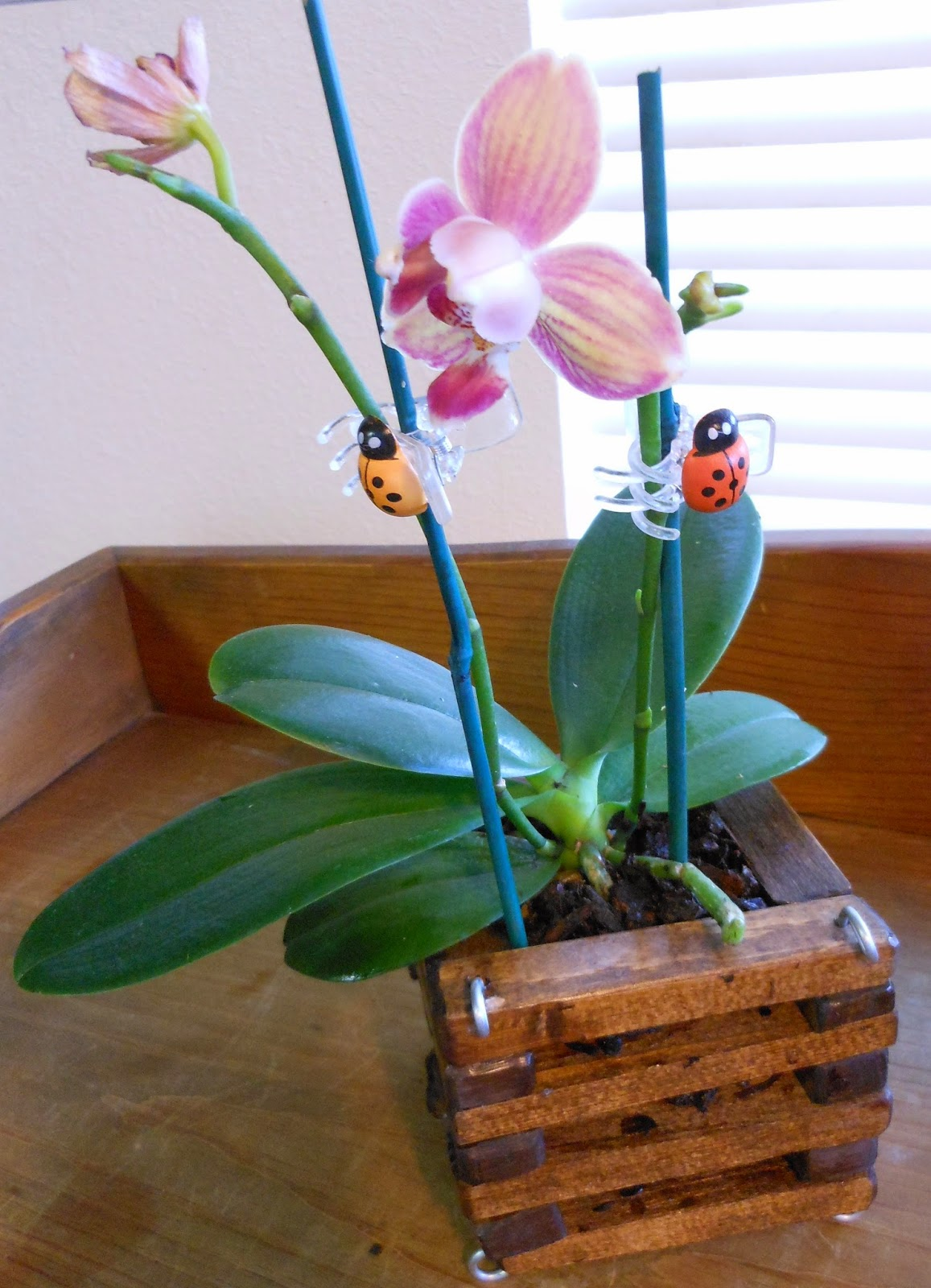 Orchid Obsession : DIY Orchid Pot