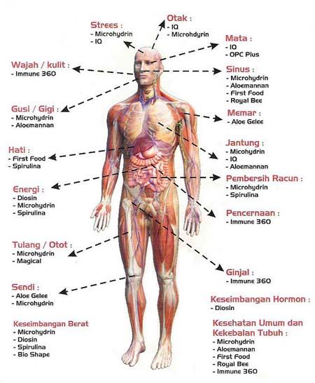 Gudang Ilmu Pengetahuan Struktus Dan Sistem Organ Tubuh Manusia