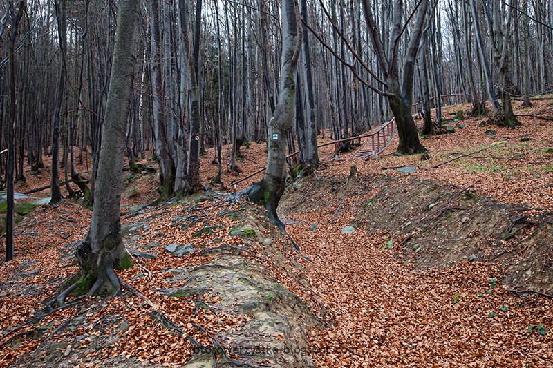 Ścieżka Przyrodnicza Folusz